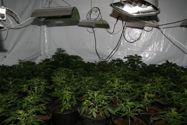 podłączenie marihuany