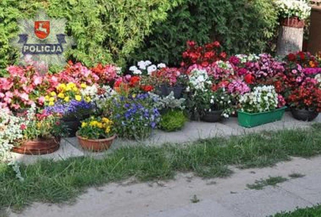 łuków Kradły Kwiaty Z Cmentarza łupy Ukryły W Bagażniku