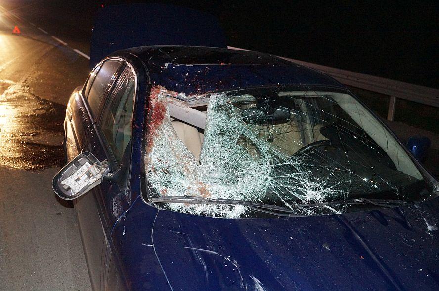 Jaguar Zderzyl Sie Z Koniem Zwierze Zginelo Na Miejscu Lublin112
