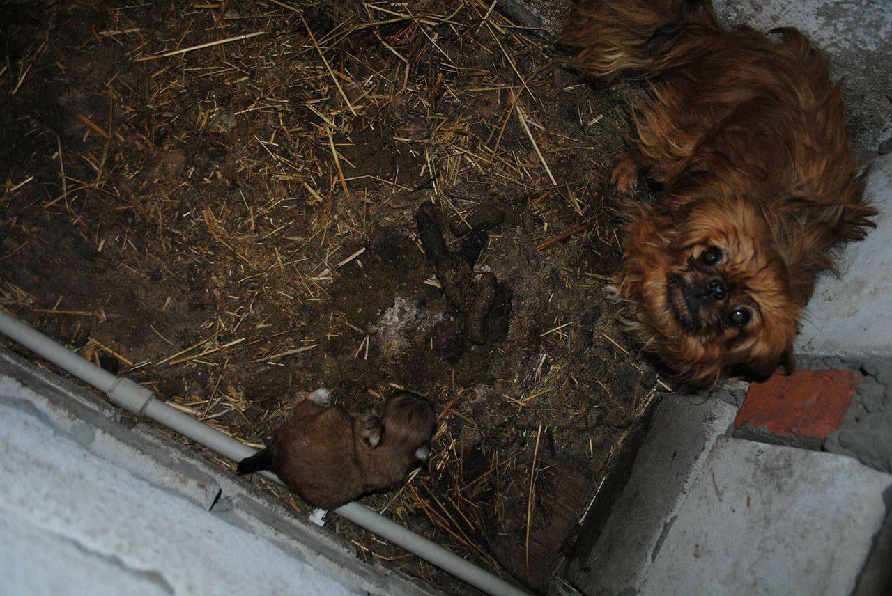 Rewelacyjny Tragiczne warunki w hodowli psów w gminie Cyców. Interweniowała BE27