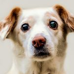 dog-316459_960_720