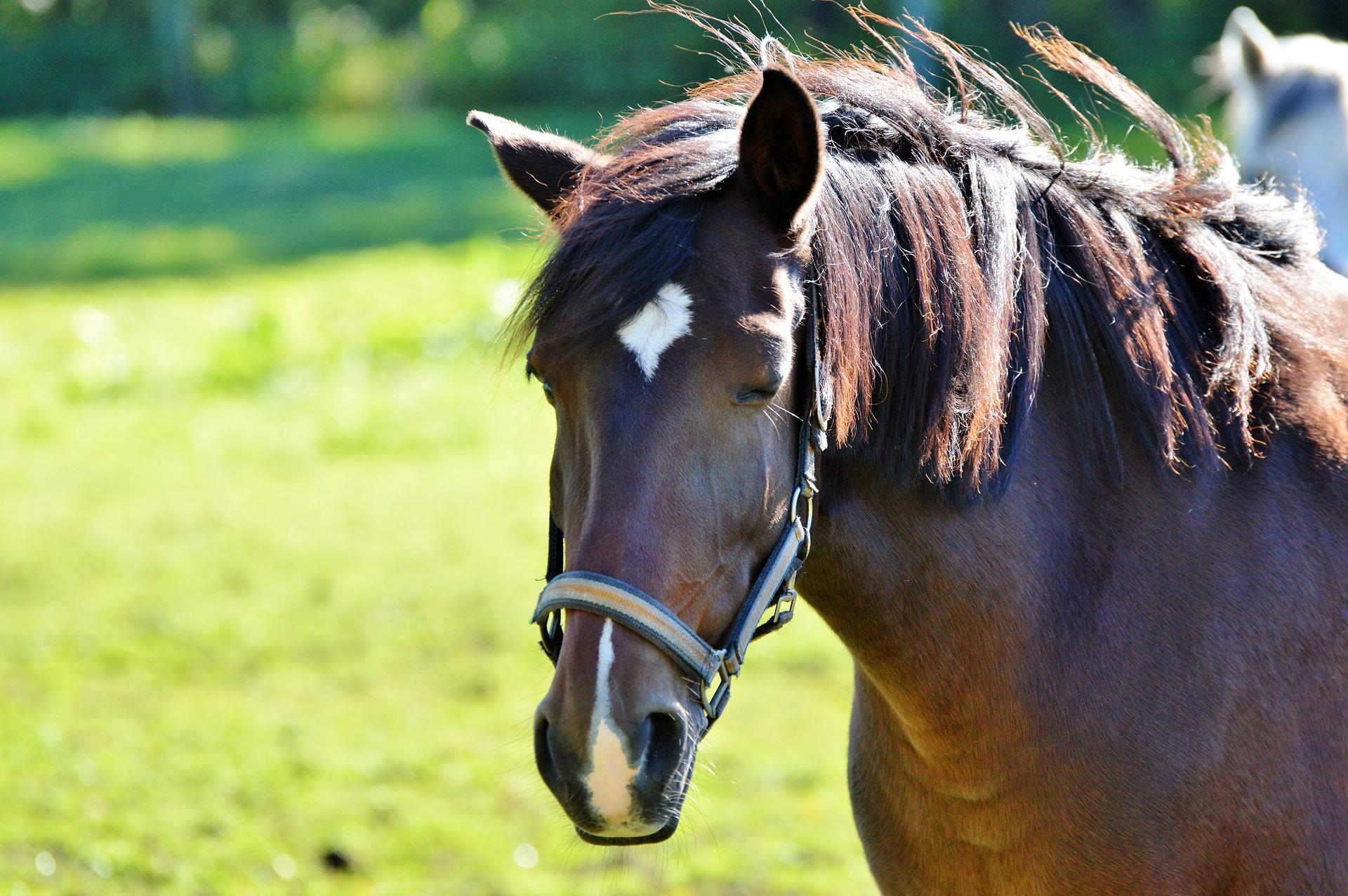 horse-2820376_1920