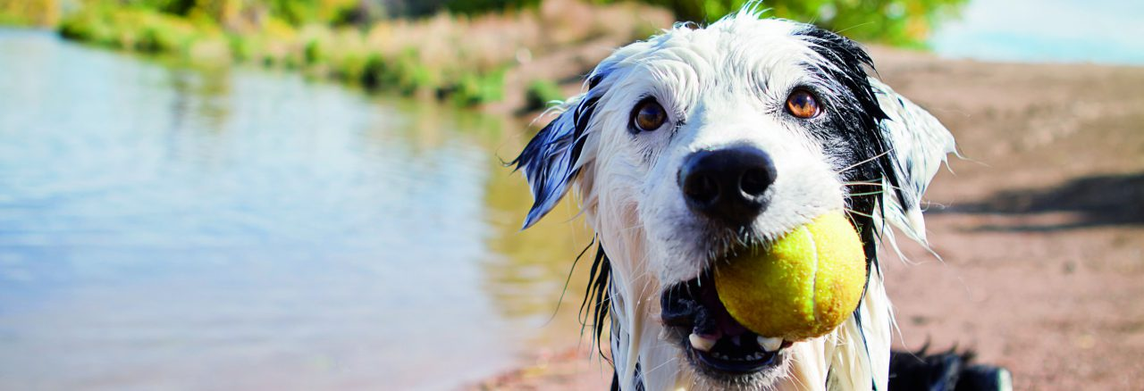 FN_Banner_3x1_img_hund_grooming_getty_148287145_OS