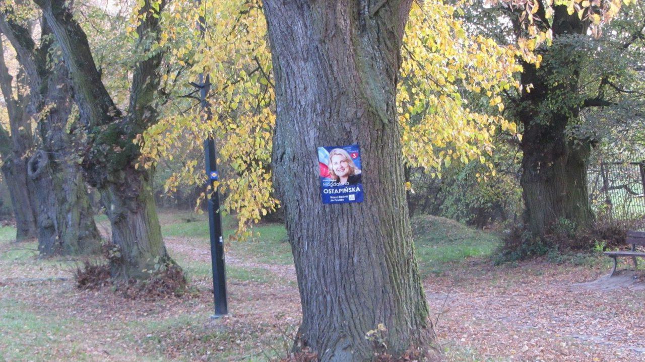 Plakaty Wyborcze Na Drzewach Kandydatka Na Radną Nie